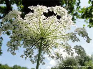 berce-commune-fleur-des-champs